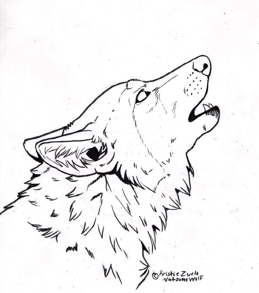 Drawn werewolf snarling wolf Picture Images Picture Drawing Wolf