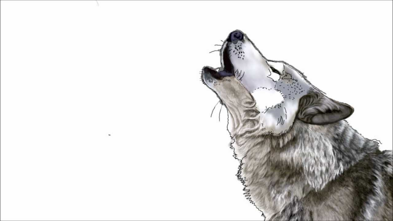 Drawn howling wolf Drawing The drawing The Howling