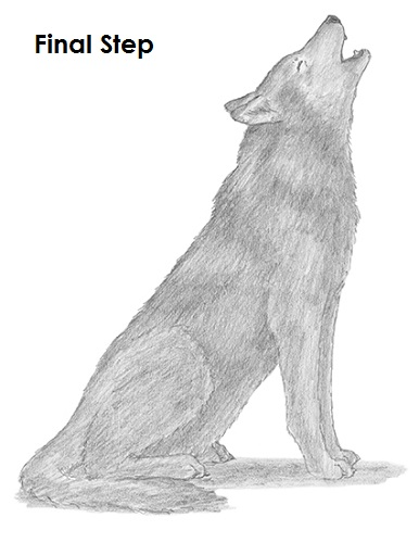 Drawn howling wolf Wolf Draw How to Wolf