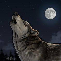 Drawn howling wolf bear How Howling to howling Step