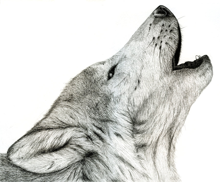 Drawn howling wolf bear From Kanye to Forum West's