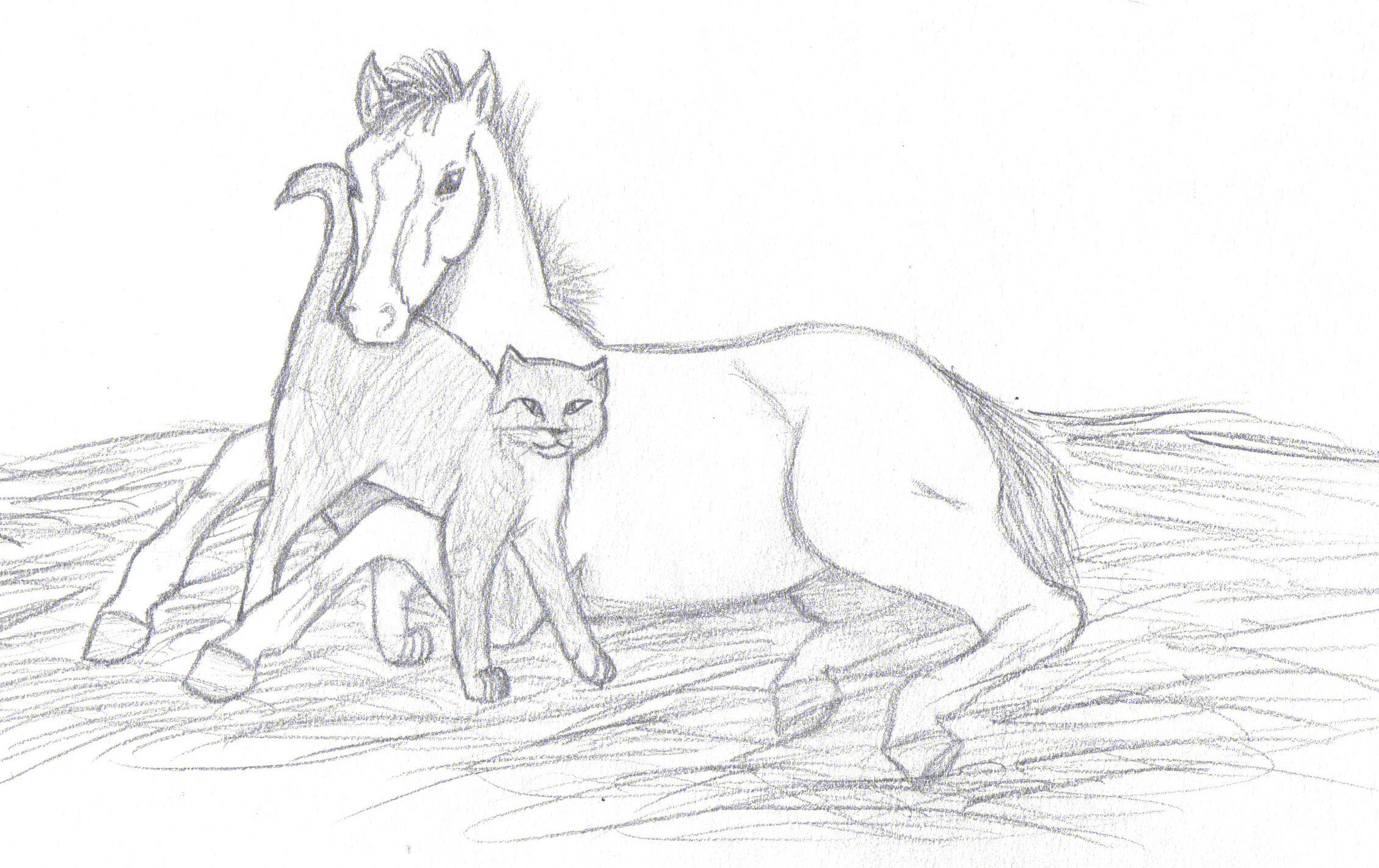 Drawn howling wolf cat On Foal and Wolf Cat