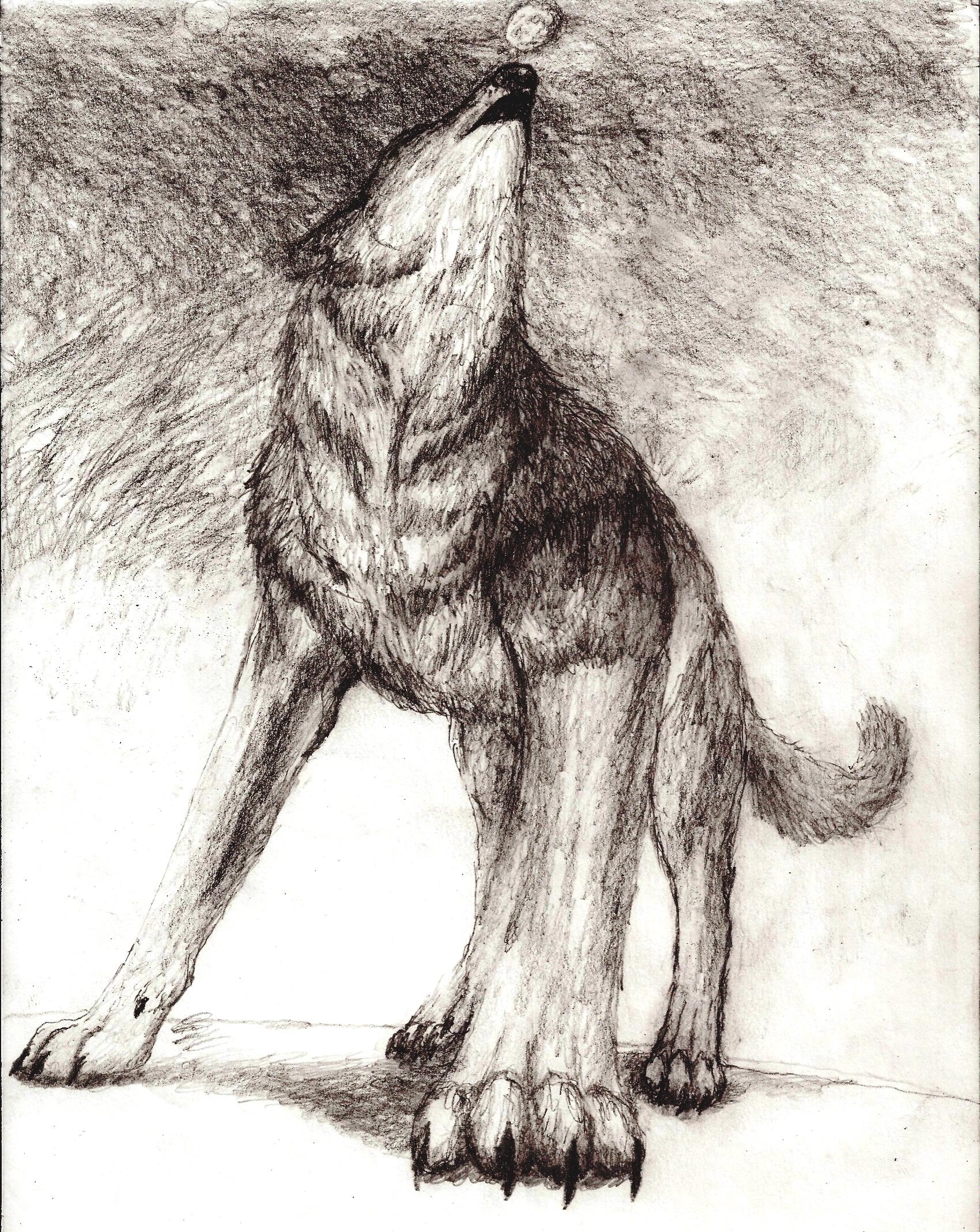 Drawn howling wolf cat Art  height=510]http://fc09 5 deviantart