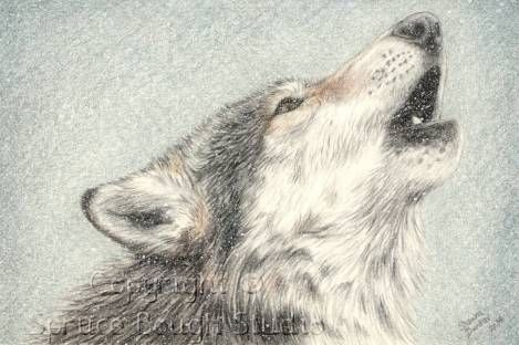 Drawn howling wolf cat Wolf drawing  Hledat wolf