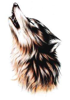 Drawn howling wolf fox  tattoo Tattoos dream our