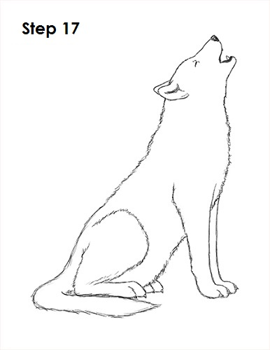 Drawn howling wolf fox (Howling) a Howling Wolf Draw