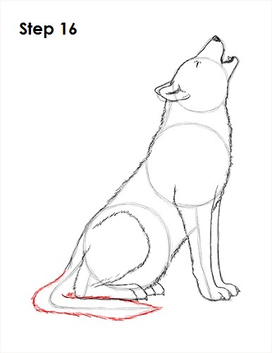 Drawn howling wolf puppy (Howling) to How 16 Howling