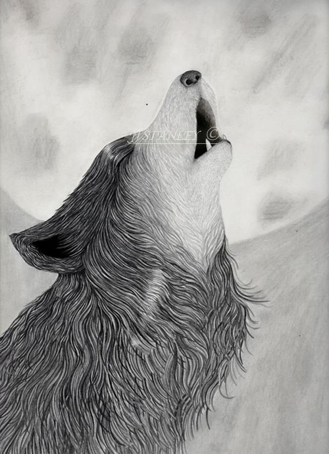 Drawn howling wolf realistic Howling Realistic sketch wolf photo#12