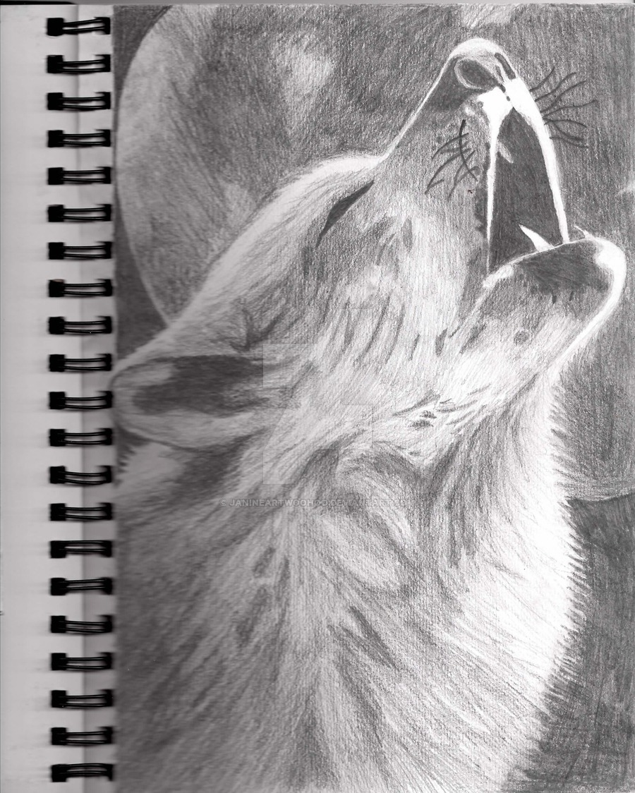 Drawn howling wolf realistic Wolf Collection Image Wolf Janineartwoohoo