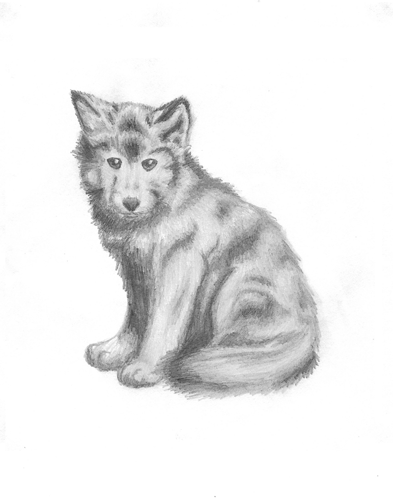 Drawn howling wolf wolf pup By Katalisk com Wolf by