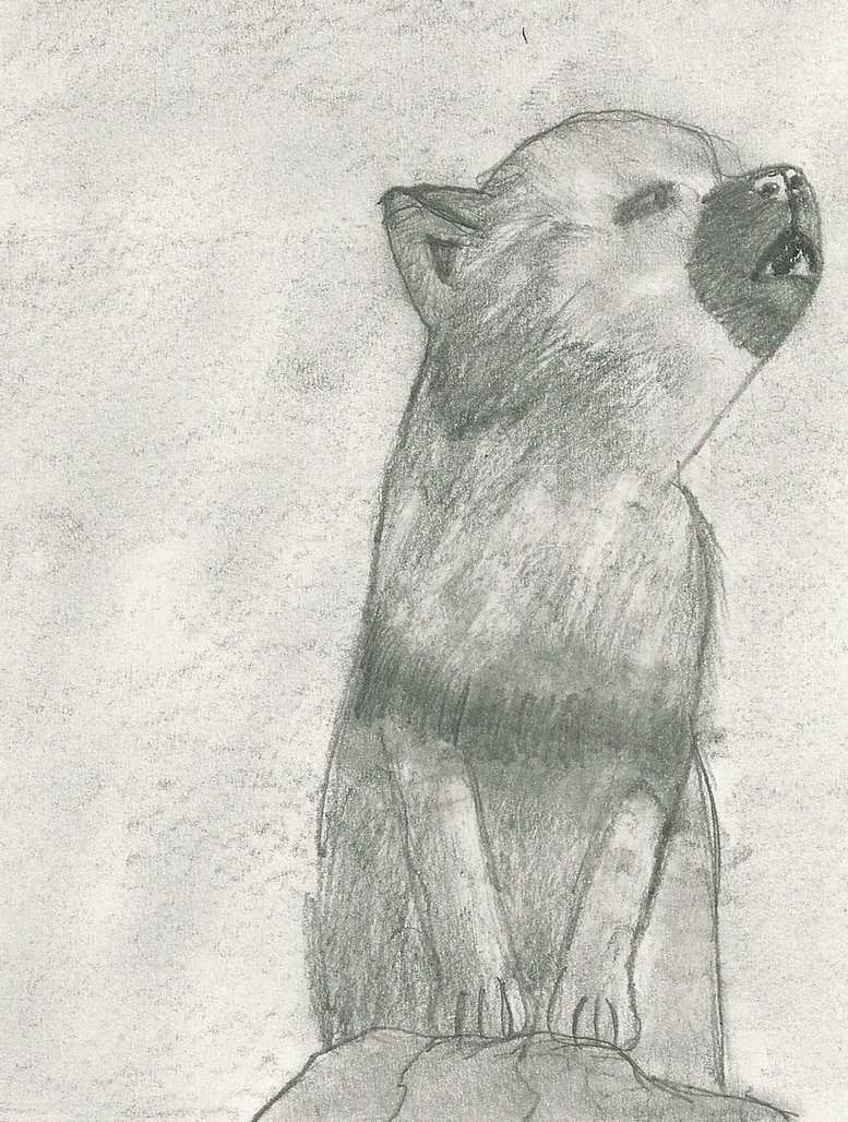 Drawn howling wolf wolf pup Free Drawing – Howling Puppy
