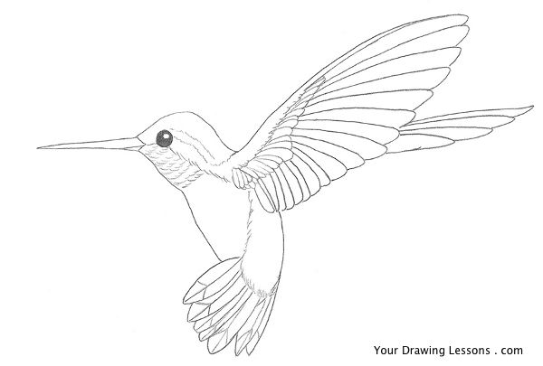 Drawn hummingbird Hummingbird Your How Drawing a