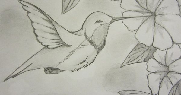Drawn hummingbird By Pinterest WOLFDEMON001 Hummingbird Drawings