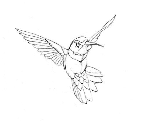 Drawn hummingbird 3216580 Pinterest Best nicholls hummingbird