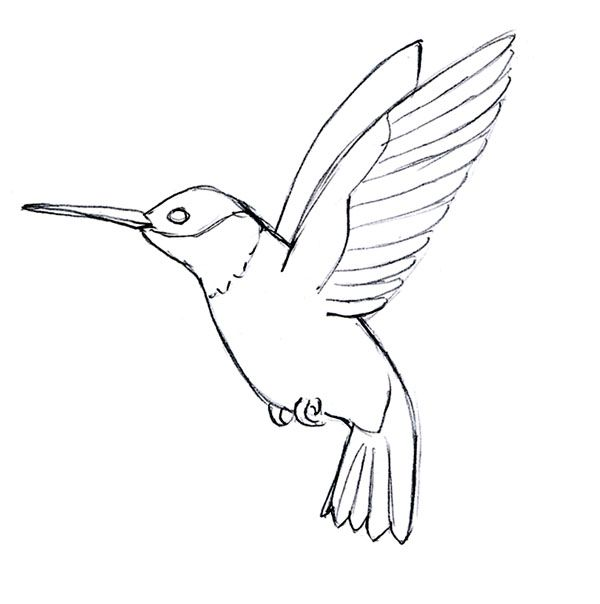 Drawn hummingbird Qqttfuq Pinterest Best Drawing Simple