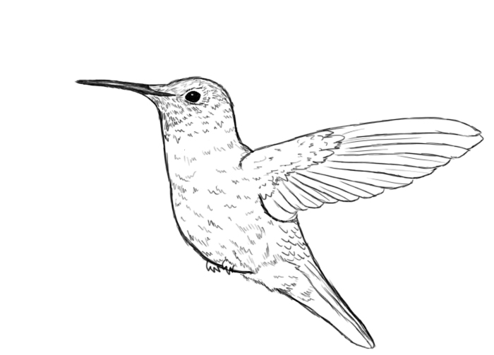 Drawn hummingbird Realistic Art Hummingbird Hummingbird Picture