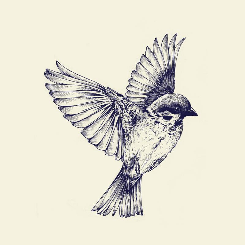Drawn hummingbird amazing bird Worth Watching Inked of Collection