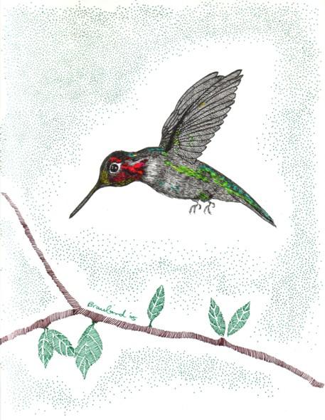 Drawn hummingbird anna's hummingbird Realism Hummingbird Anna's