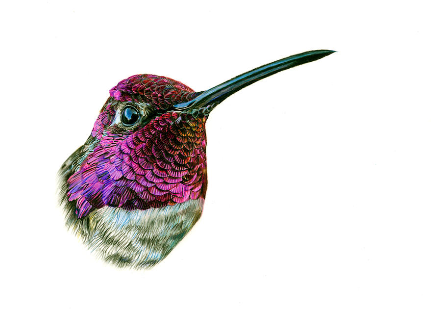 Drawn hummingbird anna's hummingbird By Logan Hummingbird Painting Anna's