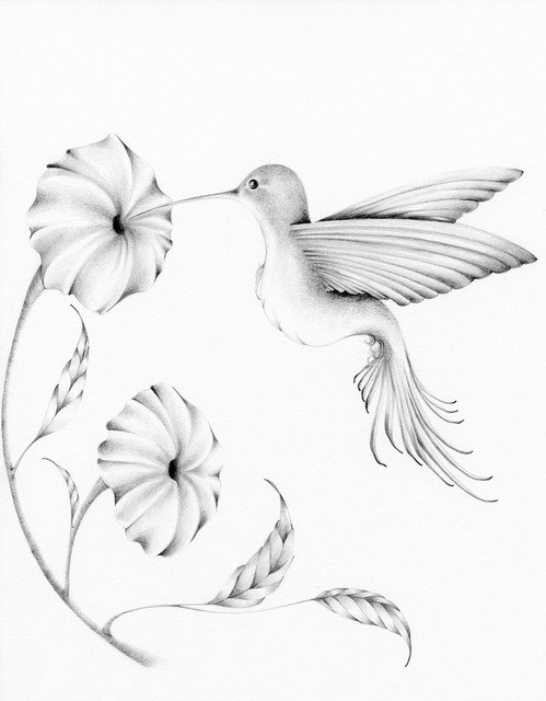 Drawn brds hummingbird Passion Haber] Drawing of Drawings