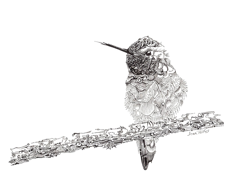 Drawn hummingbird black and white Hummingbird illustration line fine art