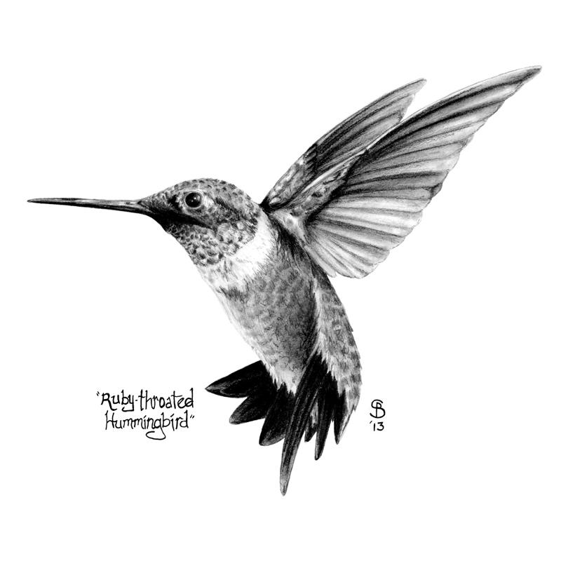 Drawn hummingbird black and white Ruby Throated Black Hummingbird Pinteres…