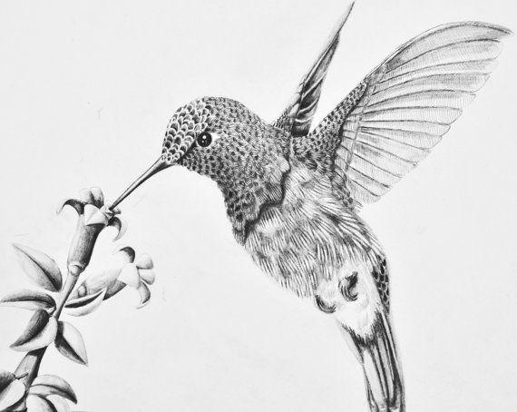 Drawn brds hummingbird On to Feeding and 454