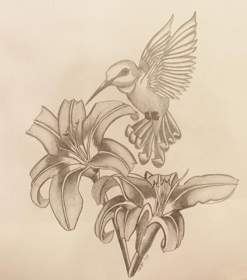 Drawn hummingbird hummingbird flower Jpg brown jpg jodi (796×900)