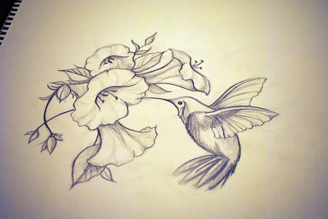 Drawn hummingbird hummingbird flower Recent Drawings FlowersHummingbird  Map