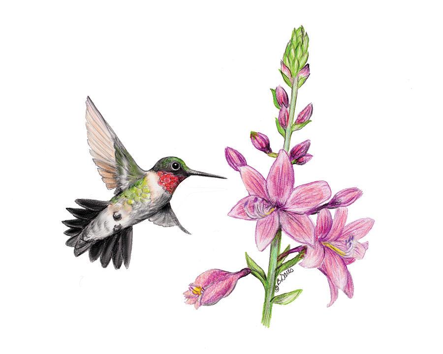 Drawn hummingbird hummingbird flower Hummingbird Pinterest images 105 best