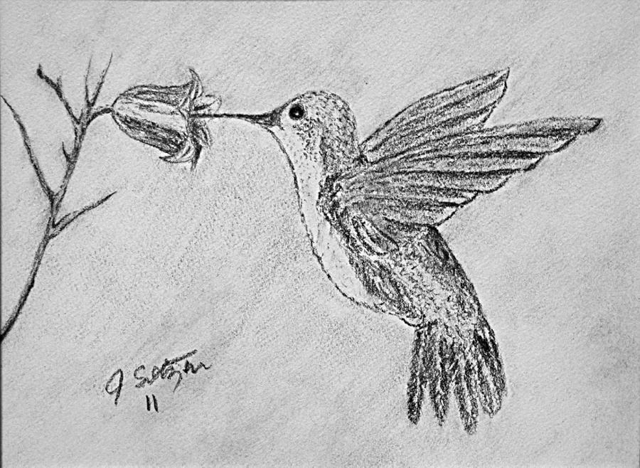 Drawn hummingbird hummingbird flower Sketch Flower And Hummingbird Flower