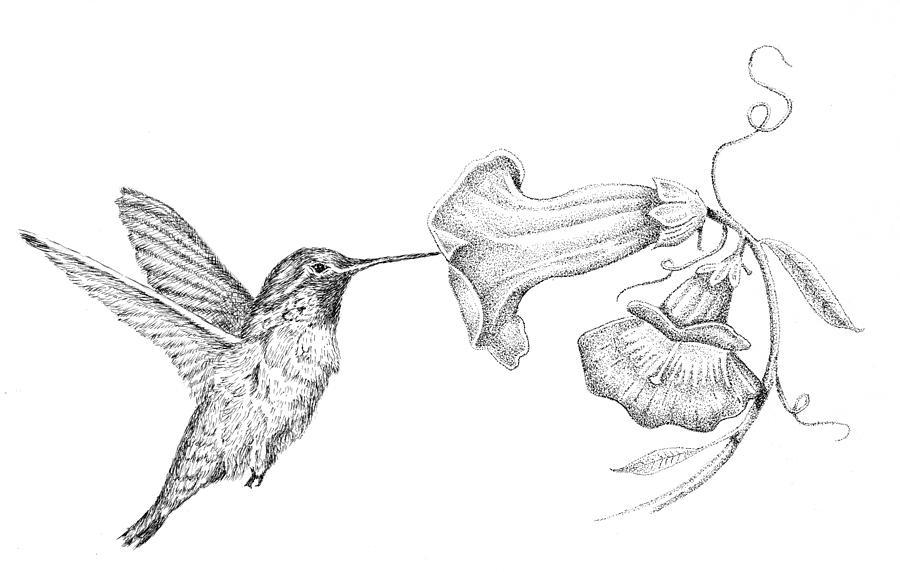 Drawn hummingbird hummingbird flower Peron Kyle Kyle Drawing Peron