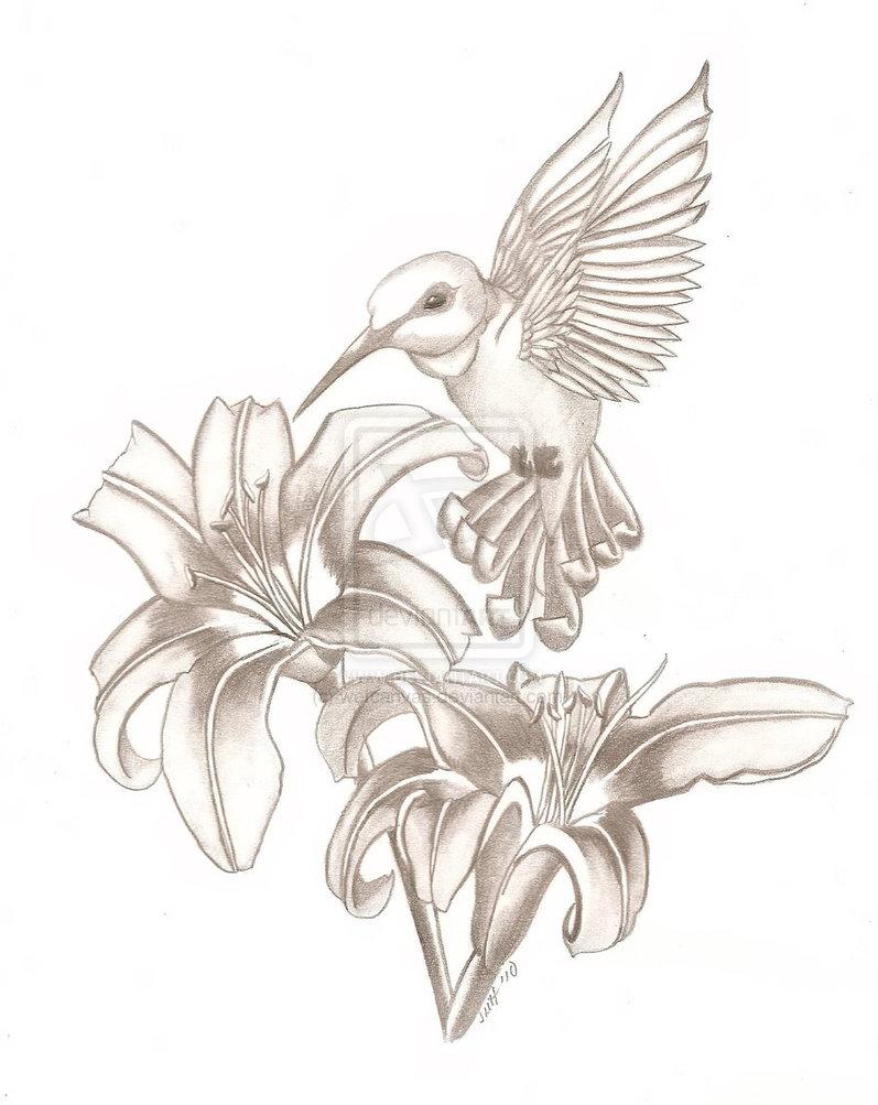 Drawn hummingbird hummingbird flower And hummingbird HummingbirdHummingbirdsDeviantart Tattoo Louis