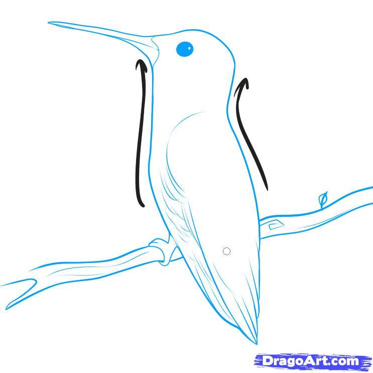 Drawn hummingbird japanese To to Draw Hummingbirds how