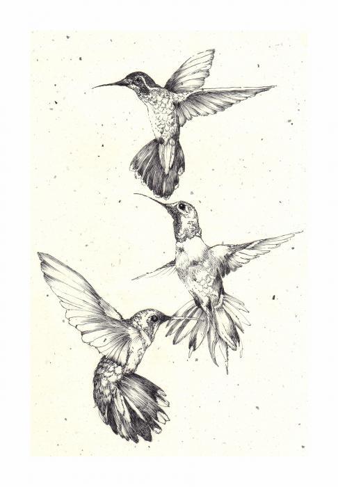 Drawn hummingbird japanese To the has to small