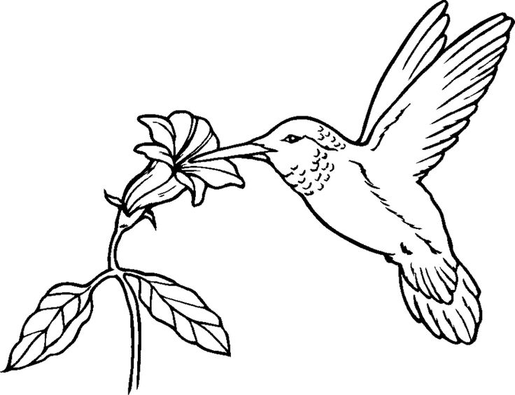 Drawn brds coloring page Art Pin Humming Find Birds
