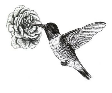 Drawn brds ink Art: Drawing  Hummingbird Ink
