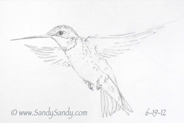 Drawn hummingbird pencil sketch Is Greetings Drawing yesterday's Heaven!