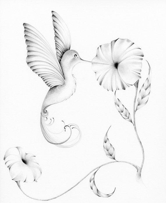 Drawn brds hummingbird Print Drawing Winter Fine Pencil