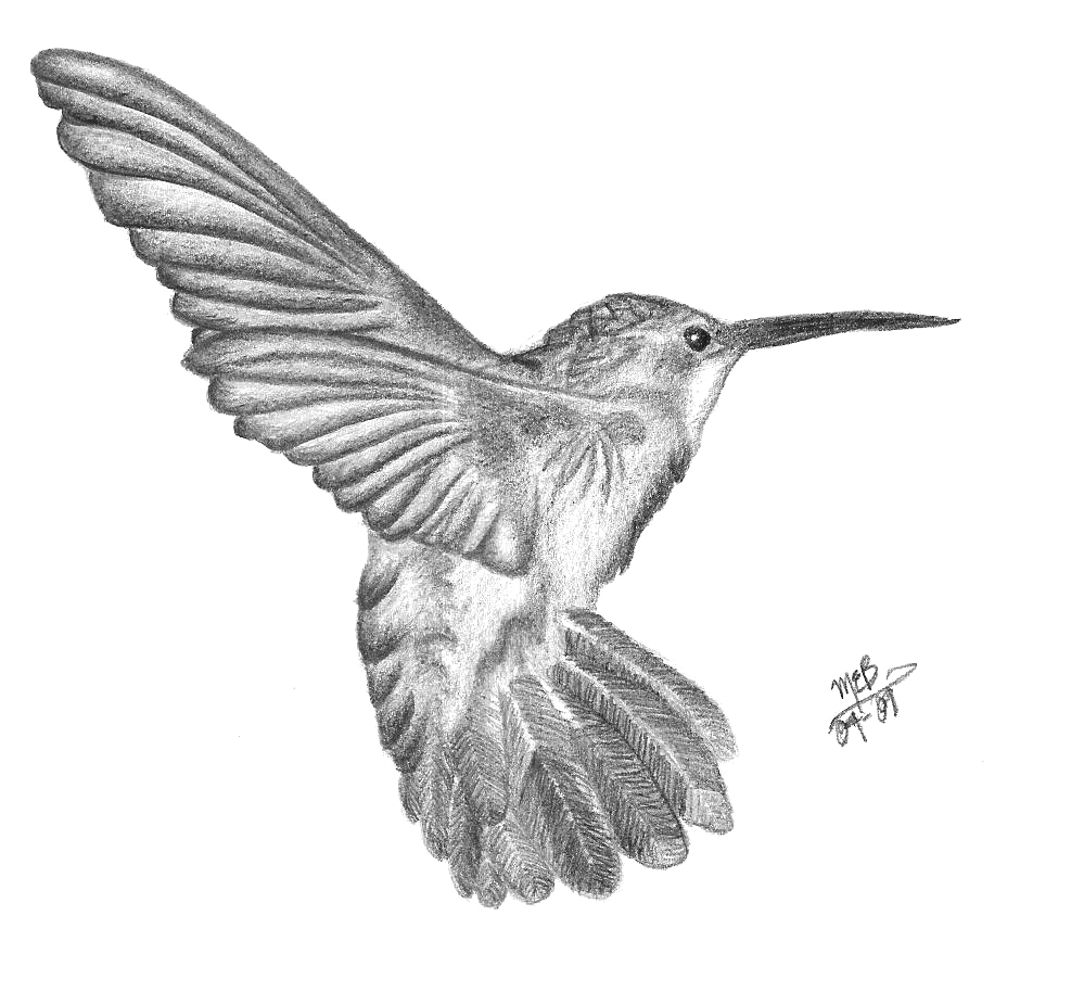 Drawn hummingbird pencil sketch Pencil drawing on by Pencil