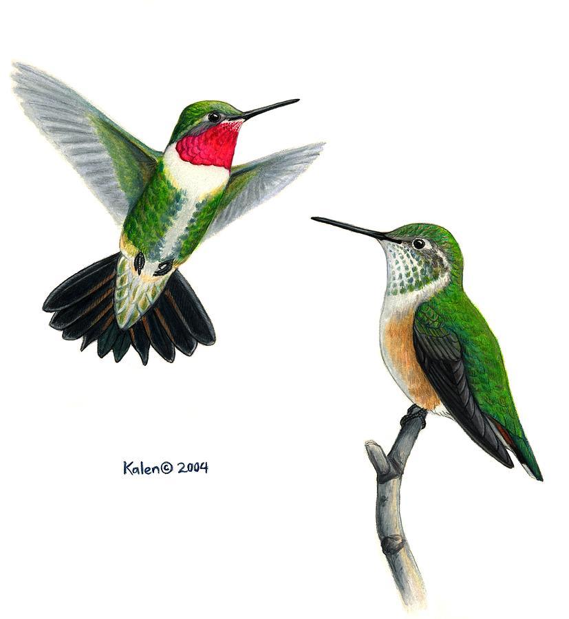 Drawn hummingbird phoenix A tailed hummingbird Hundreds to