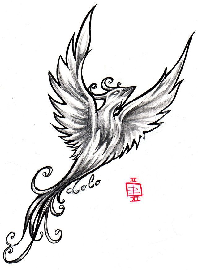 Drawn hummingbird phoenix 11 on  images animals