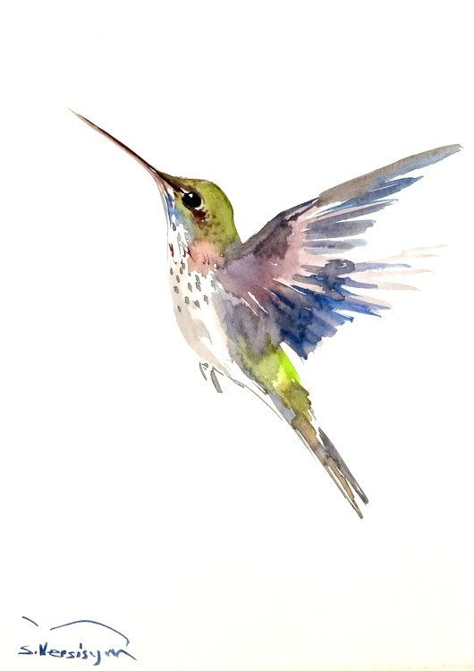 Drawn hummingbird rufous hummingbird Ideas by 9  Watercolor