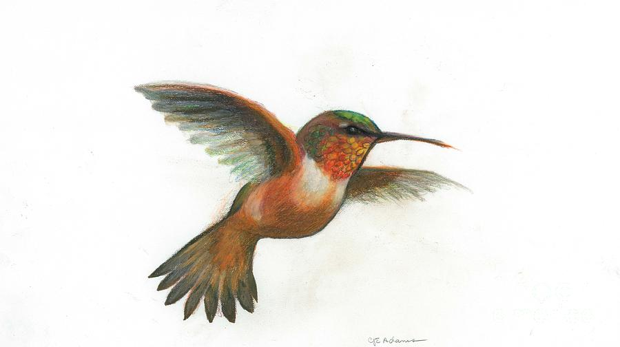 Drawn hummingbird rufous hummingbird Adams Rufous by Cheryl by
