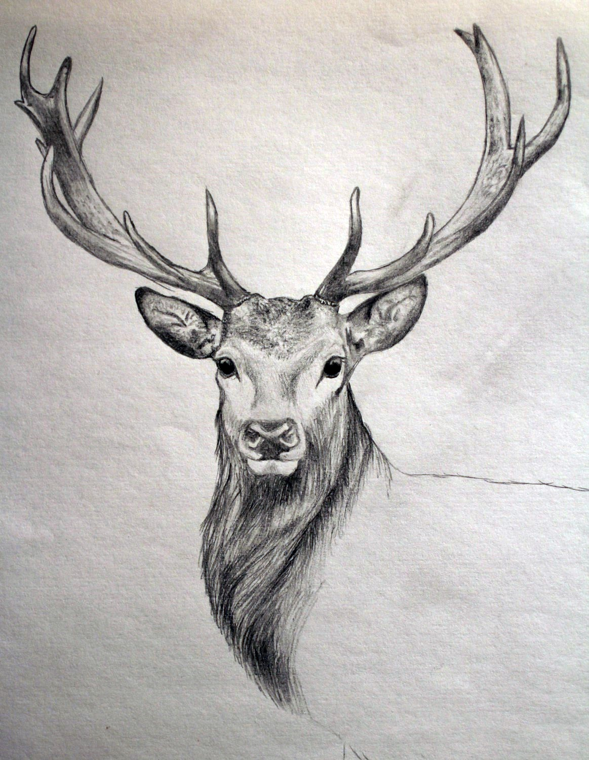 Drawn reindeer realistic Pinterest … Drawing Drawing hunting