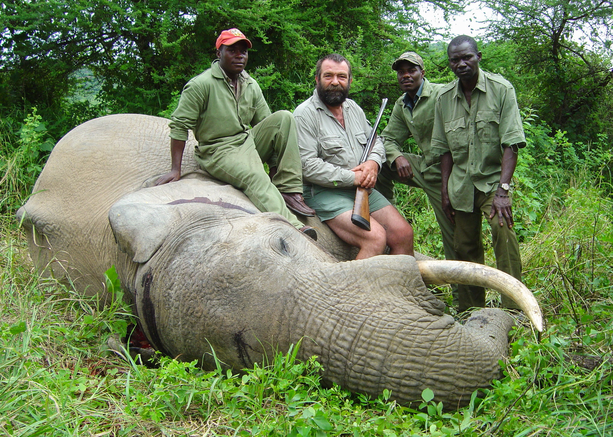 Drawn hunting african savanna Helping African Elephants?  Hunting