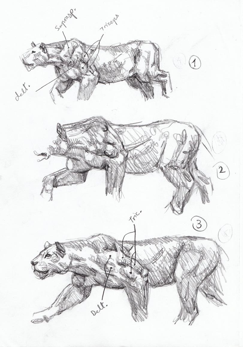 Drawn hunting cheetah Diaries artist de Sabertooth de