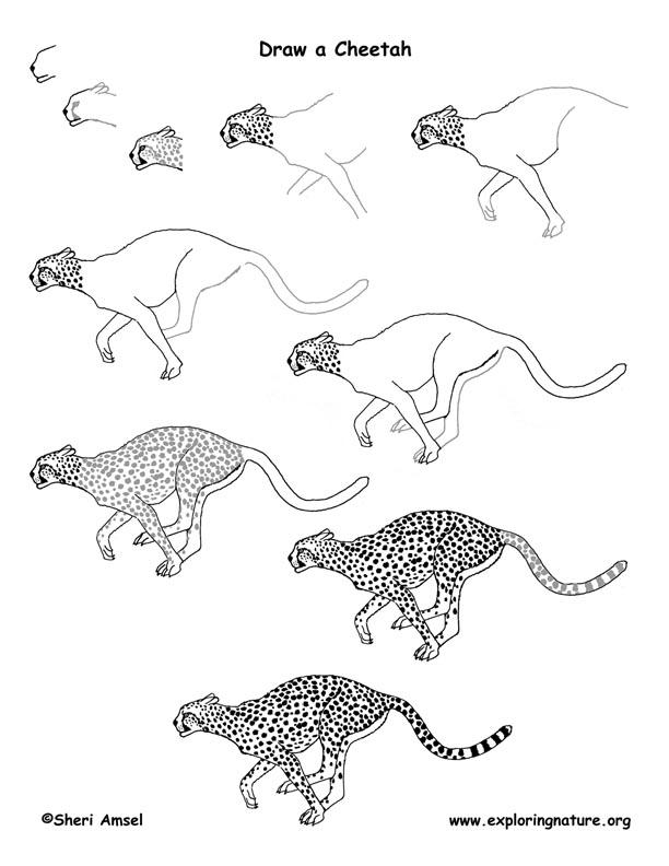 Drawn hunting cheetah 110  best Animals on