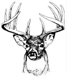 Drawn hunting deer logo Art Deer on Whitetail images