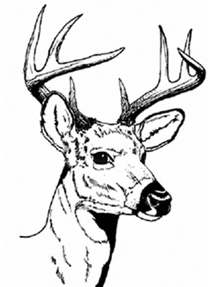 Drawn stag hunting Images deer sport Pinterest dates